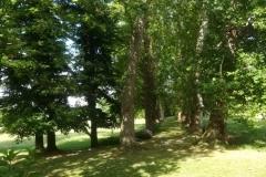 Villa-Godi-Piovene_Il-Parco_10